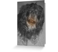 Willow ... Greeting Card