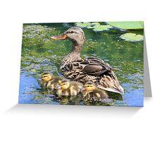 Mallard Mama with her Babies Greeting Card