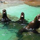 Yelling Seals by Elena Vazquez