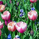Spring Tulips by Glenna Walker