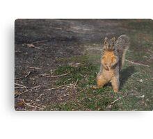 Silly Squirrel Metal Print