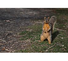Silly Squirrel Photographic Print