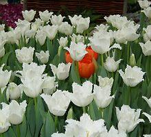 Bellagio spring flowers by JoyceIone