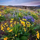 Blue and Gold by DawsonImages