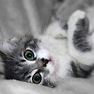 Marvin - The Purrrfect Kitten by Teresa Zieba