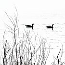 Geese on Shabbona Lake by Brian Gaynor