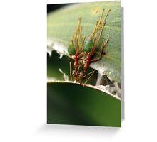 greenants, nest building Greeting Card