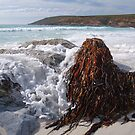 point ann, western australia by col hellmuth