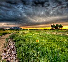 Maverick Flower by Bob Larson