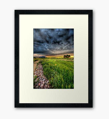 Maverick Flower Framed Print