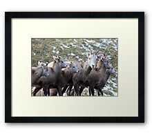 Mountain Sheep Herd Framed Print