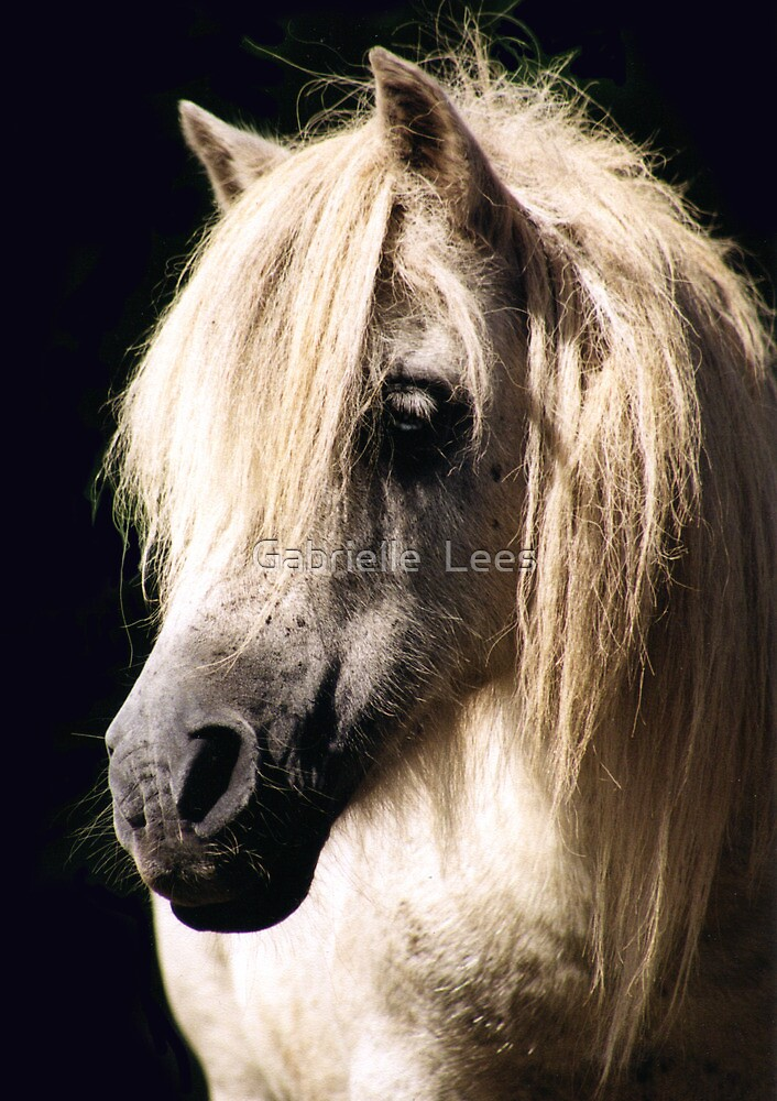 Pony Stallion by Gabrielle  Lees