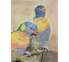 Mothers Love Birds for best review go to enlarge Photographic Print