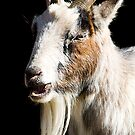 goat by wendywoo1972