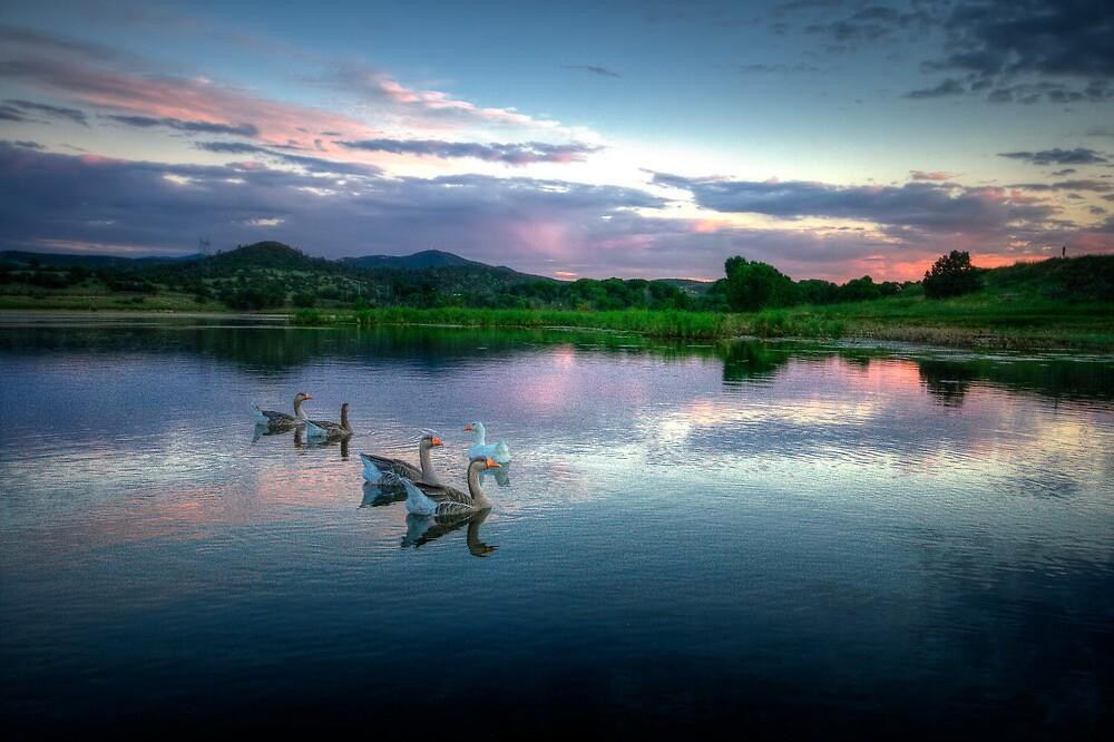 Sunset Ducks by Bob Larson