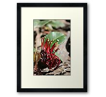 """Spider Man-Flower"" Framed Print"