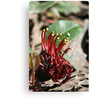 """Spider Man-Flower"" Canvas Print"