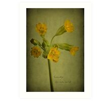 To the cowslip Art Print