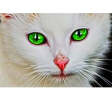 Green Eyes Cat Photographic Print