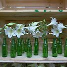 seventeen green bottles sitting on a shelf.... by BronReid