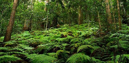 The Undergrowth by Liza Yorkston