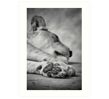 The Lion's Paw Art Print