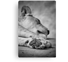 The Lion's Paw Canvas Print