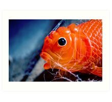 All the little fishes Art Print