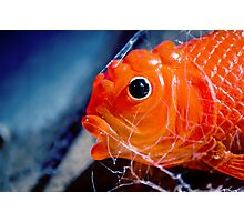 All the little fishes Photographic Print