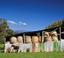 Hayshed - Paradise, Tasmania by Tim Wootton