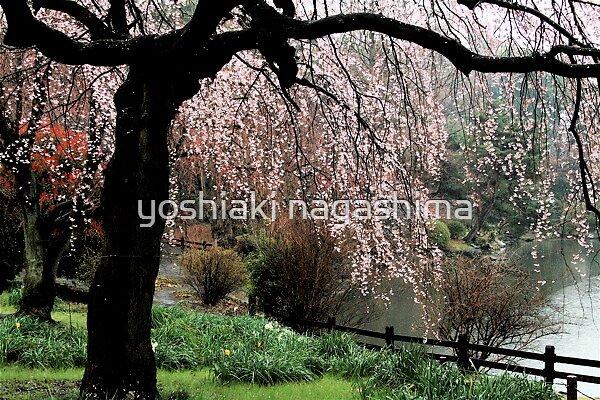 Spring Garden , Tokyo JAPAN by yoshiaki nagashima