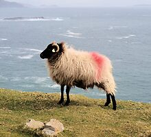Tagged Sheep by Paul Mc Namara