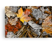 Fading Glory- Canvas Print