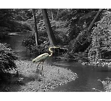 Selectively Yours Photographic Print