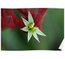 Australian wildflower Poster