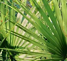Palm Sunday by tim norman