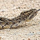Africa's Deadly Serpent by Michael  Moss