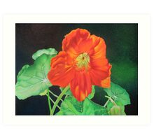 Nasturtium - Glowing with confidence Art Print