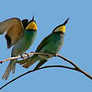 European Bee-Eaters by Robert Abraham