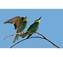 European Bee-Eaters Photographic Print
