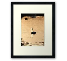 Swan on the Great Ouse Framed Print