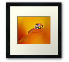 Pansy drop Framed Print