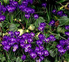 Purple Hearts by Rodney Williams