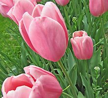 Full Frame Pink Tulips Photograph by Adri Turner