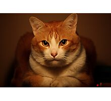 Well.... If It Isn't The Chesire Cat.   Photographic Print