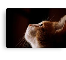 Kitty Heaven? Canvas Print