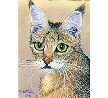 A Pensive Feline Photographic Print