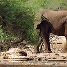 ELEPHANT BEHAVIOUR - THE LIONS,ELPHANT,GIRAFFE AND THE CROCODILE by Magriet Meintjes