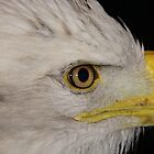 Eye of the Eagle by tcat757