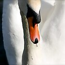 Swan by Richard Pitman